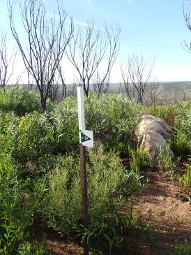 Regrowth after bushfire late 2015