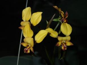 Twin flowers in flashlight