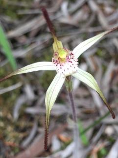 Short petals and sepals
