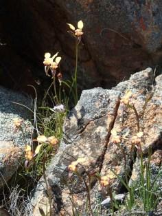 Rocky granite habit