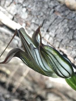 The glistening flower