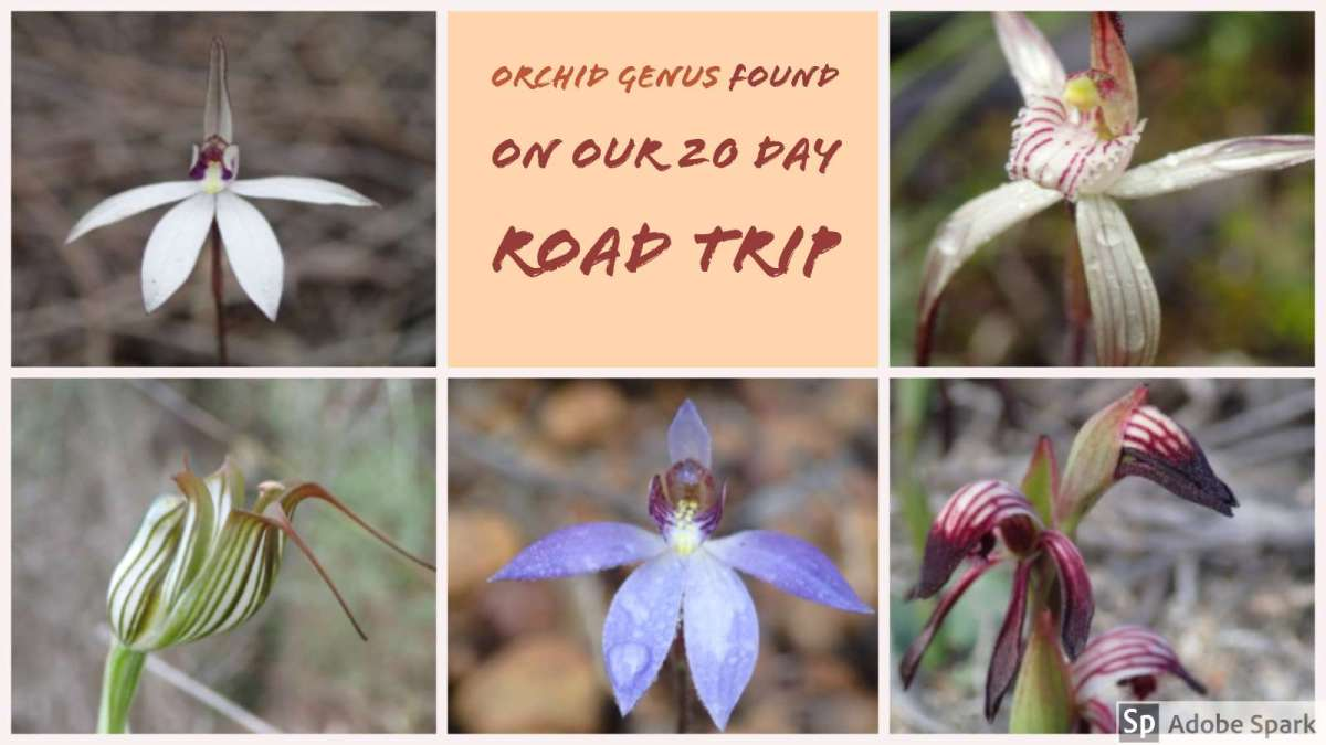 Road Trip 2017 – Listing of Orchids found