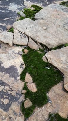 Moss n granite