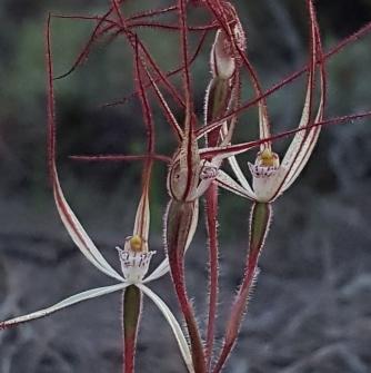Tangle of petals and sepals