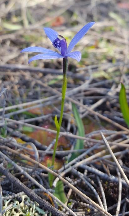 Full flower shot
