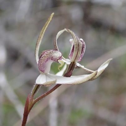 Rare double headed flower