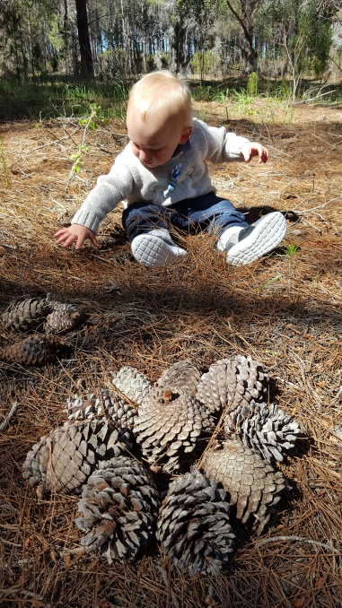 Pinecone collecting