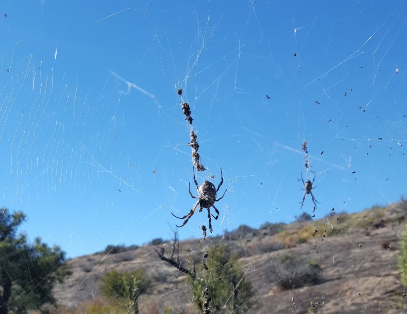 Spiders to avoid