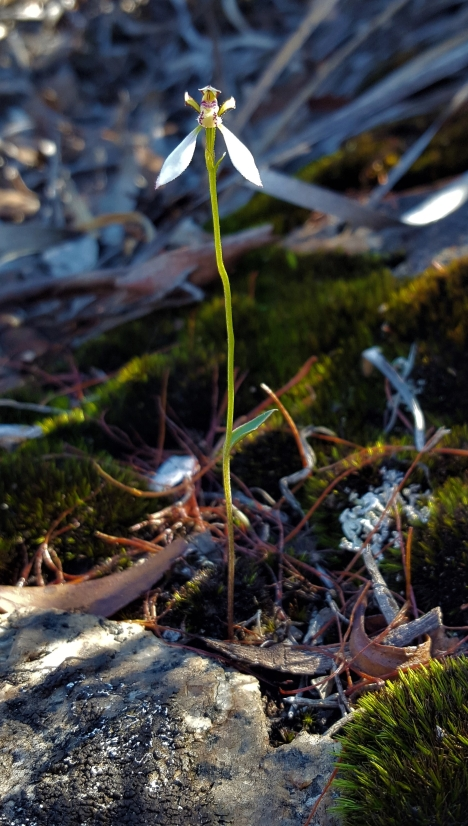 Typical habitat - Moss on granite